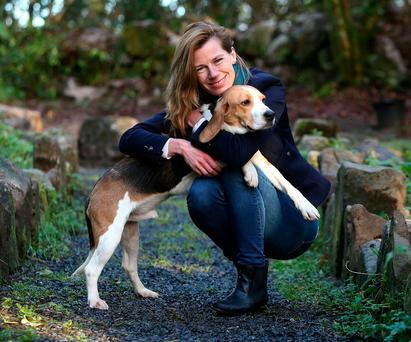 WALKIES: Dasher, one of the 10 beagles released from the Charles River Laboratory, enjoys some time with ISPCA Longford centre manager Eva Ellis. Photo: Damien Eagers