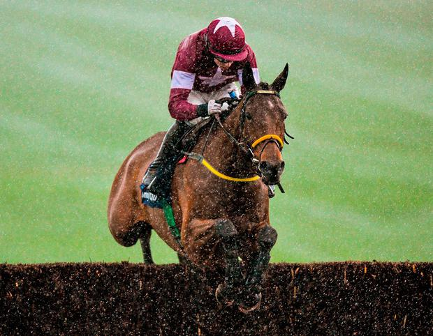 Noel Meade's Road To Riches will appreciate the better ground at Kempton. Photo: Matt Browne / Sportsfile