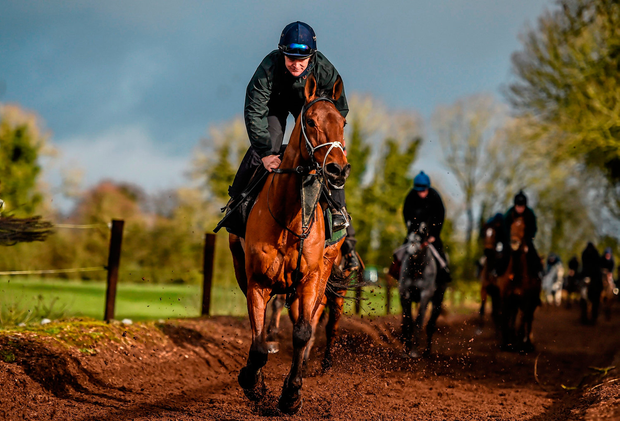 Noble Endeavor, with Bobby McNally up, on the gallops at Gordon Elliott's stable Picture: Sportsfile