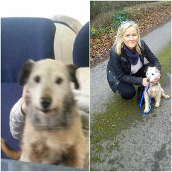 L:Odi on the train to Dublin. R: Odi with his owner Siobhan back in Portarlington
