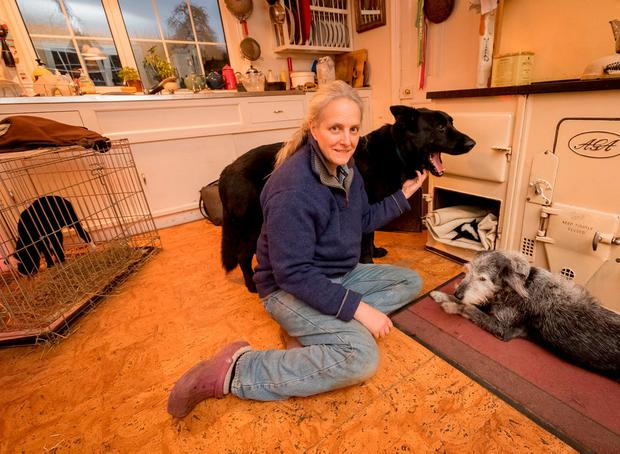 Suzanna Crampton with Teeny Tiny in the bottom of the oven, watched by her dogs Big Fella (left) and Pepper, and with Teeny's big brother in a cage beside her. Photo: Dylan Vaughan
