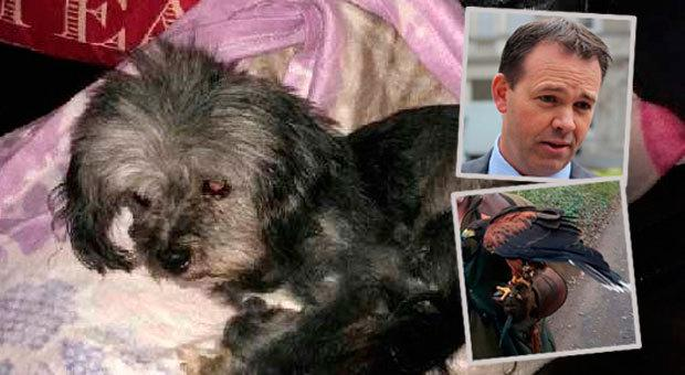 TD John Brady (inset) says his dog Bonnie (centre) is recovering after an alleged attack by a Harris hawk (right)