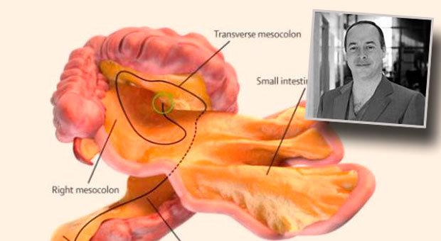 Mesentery: A new organ has been discovered inside the human body by ...