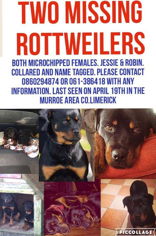 The dogs were stolen on April 19 2015