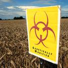 Seventeen EU countries - including France, Germany, Italy and Poland - have national bans on the two crops