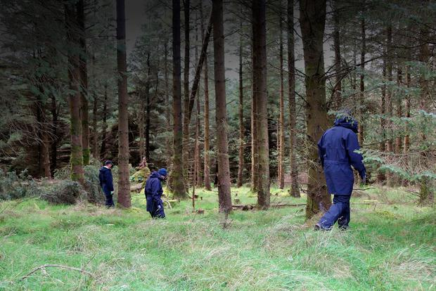 Gardaí search a wooded area on Ballinascorney Hill where the body of Michael McCoy was found last September Picture: Collins