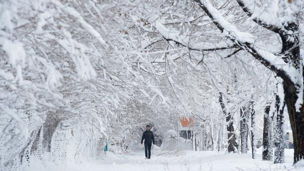 A park in Kabul blanketed in snow Photo: Reuters