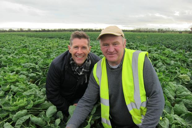 Dermot and Enda and a sea of Brussels sprouts