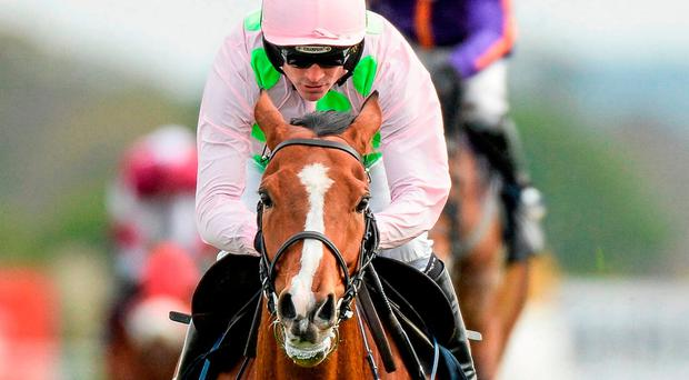 Faugheen, with Ruby Walsh up. Photo: Cody Glenn / Sportsfile