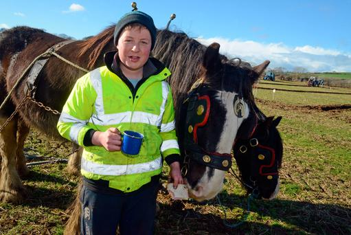 Michael O'Donovan from Timoleague taking a break with his horses Paddy and Larry at the annual ploughing match at Timoleague, Co Cork. Photo: Denis Boyle
