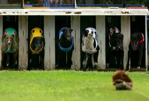 "A delay in publishing the accounts of debt-ridden Bord na gCon, the Irish Greyhound Board, has been branded ""a disgrace"" at the Public Accounts Committee (PAC). Stock photo: Getty"