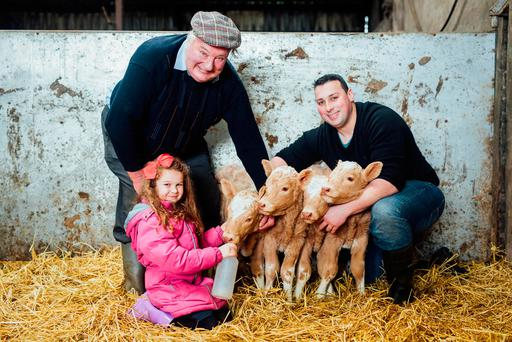 Tom, left, and Enda Clair with, as she is affectionately known, 'farm manager' Mia McMahon and the heifers. Photo: Brian Arthur