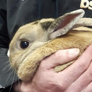 John Paul the rabbit. Pic: DSPCA
