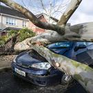 Fallen tree damages car in Stamullin Co Meath