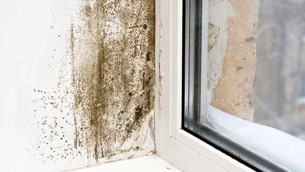 Black mould is a fungi which will happily grow where there is damp.