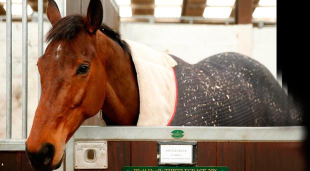 'The ultimate proof that this is the most confounding year had came when Colin Tizzard announced that Thistlecrack would miss the Gold Cup after sustaining a damaged tendon.. Photo: Matthew Childs/Reuters