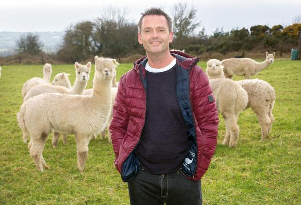Aengus pictured with his alpaca herd