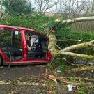 A pensioner critically injured by the falling tree during Storm Doris has died in hospital Photo: West Midlands Ambulance Service/PA Wire