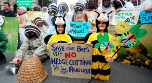 Sisters Aisling (6), Róisín (3) and Laoise (8) O'Morain from Sandymount, Dublin, and members of Beekeepers Ireland protesting outside Leinster House against the Heritage Bill 2016. Photo: Tom Burke