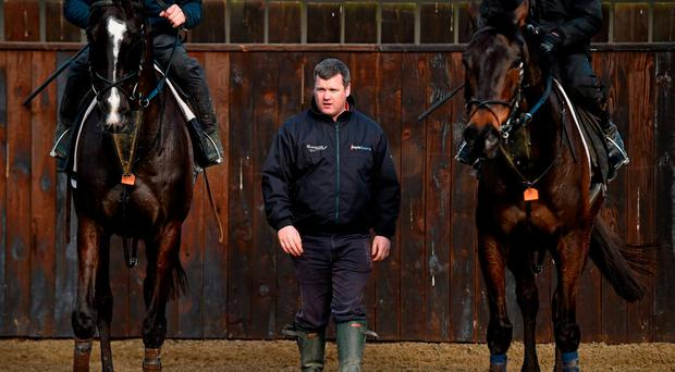 Trainer Gordon Elliott pictured running his eye over some of his horses at his stables in Co Meath. Photo: Ramsey Cardy / Sportsfile