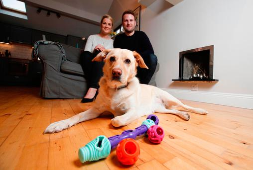 Mega bite: Sandy the Labrador plays with Lauren and James McIlvenna's new interactive dog toy. Photo Conor McCabe