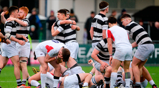 Belvedere College players celebrate after yesterday's semi-final win over Clongowes at Donnybrook Photo: Piaras Ó Mídheach/Sportsfile
