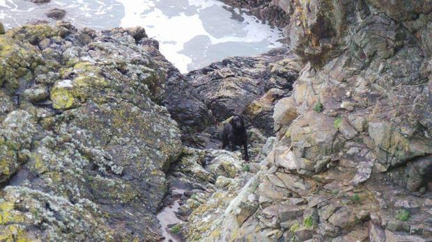 Gertie pictured at the cliffs where she was rescue on Wednesday night