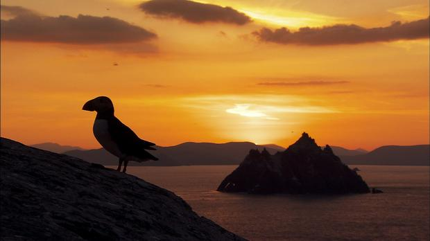 Puffins in Kerry. Credit: Eire Fhiain / TG4