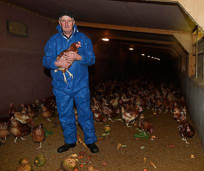 Egg producer Denis O'Connell with his hens in Co Monaghan Picture: Philip Fitzpatrick