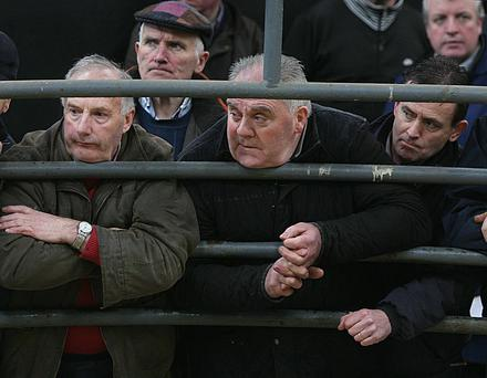 Elphin Mart. Weanling Bull Sales. Eyes Left. Photo Brian Farrell.