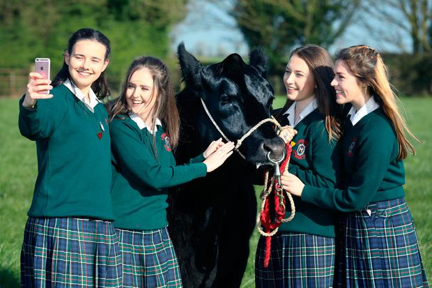 Students Emily Browne, Tara Frehill, Shauna Jager and Eithne Murray from Our Lady's School, Terenure, who reared five Angus cross calves. Photo: Finbarr O'Rourke