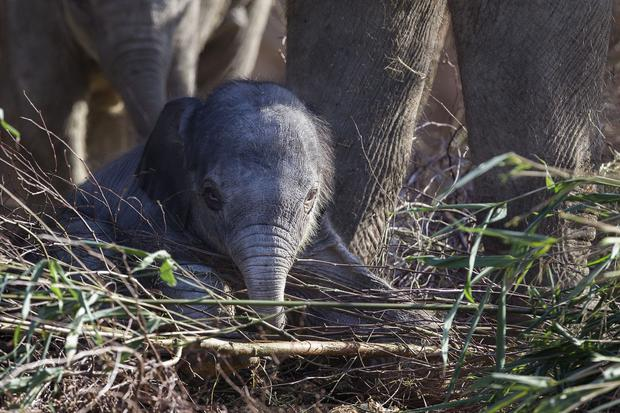 The Asian elephant calf eyes takes notice of the world around her. Pic: Dublin Zoo