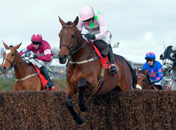 Djakadam can give Willie Mullins his first win in the Gold Cup. pic: racingpost.com