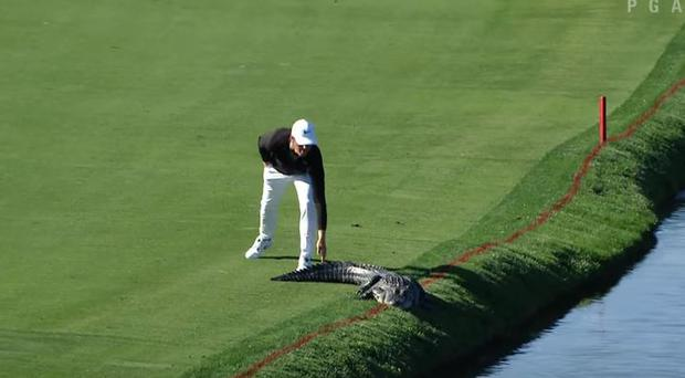 Cody Gribble tackle an alligator