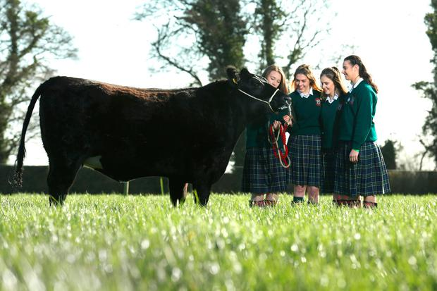 Shauna Jager, Eithne Murray, Tara Frehill and Emily Browne, from Our Lady's School, Terenure were announced as the national winners of the Certified Irish Angus Beef schools competition. The group reared five Irish Angus Cross calves for 18 months as part of an Agricultural Science schools competition. Photo: Finbarr O'Rourke