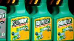 Monsanto's Roundup weedkiller atomizers displayed for sale. Photo: Reuters