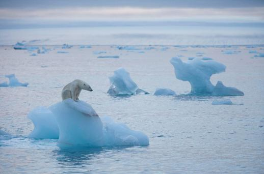 Antarctic sea ice has also been at a record low, in contrast to the trend in recent years (Stock picture)