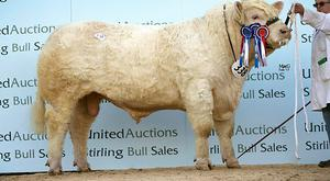 Gretnahouse Lord, purchased at the sales in Stirling by Brendan and Greg Feeney, Enniscrone, Co Sligo for 25,000 gns.