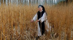 Sr Lily Scullion, of Glencairn Abbey, Lismore Co.Waterford, checking the Miscanthus Energy Crop before harvesting. Sr Lily runs the 200 acre farm at Glencairn Abbey, specialising in dry stock and tillage farming; wheat, barley, potato and fodder beat Photo:Valerie O'Sullivan
