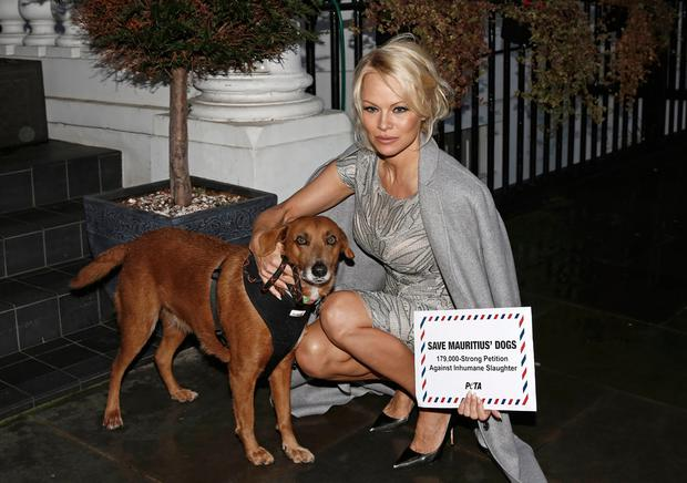 Pamela Anderson accompanied by rescued dog Zorro deliver a 178,000-name petition to the High Commission of Mauritius, urging the country to implement a spay-and-neuter programme to tackle its stray-dog problem at High Commission Of Mauritius on December 12, 2016 in London, England. (Photo by John Phillips/Getty Images)