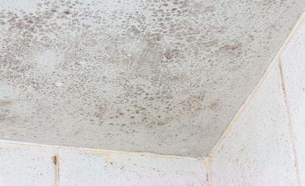 Surprising How To Get Rid Of Mould From Your Ensuite Ceiling Complete Home Design Collection Barbaintelli Responsecom