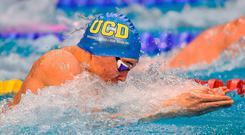 Darragh Greene, UCD Swim Club, Dublin, on his way to winning the Open Men's 50m Breaststroke Final during the 2017 Irish Open Swimming Championships at the National Aquatic Centre in Dublin. Photo by Brendan Moran/Sportsfile