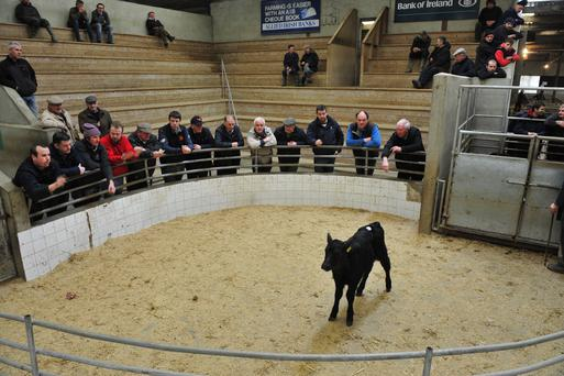 Enniscorthy Mart, April 5. Angus. €275. Photo Roger Jones.