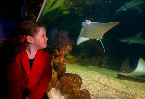 Ava McDonnell (5) with the baby stingray at the National Sea Life Centre in Bray Picture: Patrick Browne