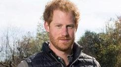 Prince Harry. Photo: Des Willie