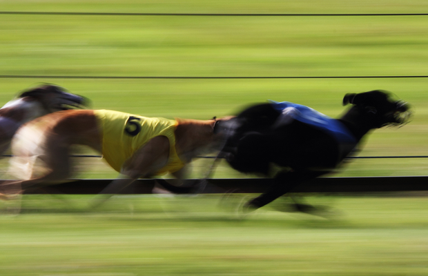 Eight Irish-trained greyhounds set out on the Scottish Derby trail at Shawfield. (Stock photo)