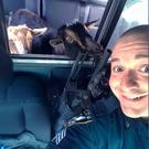 Sgt. Daniel Fitzpatrick drives around with two lost goats in his police car looking for their owner