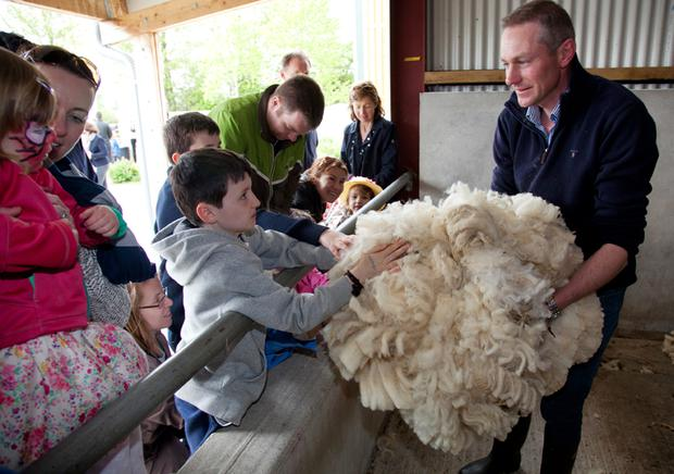 Image: Paul Sherwood - copyright Paul Sherwood © 2015 Woolapalooza Sheep Festival Airfield Estate, Dundum. May 2015