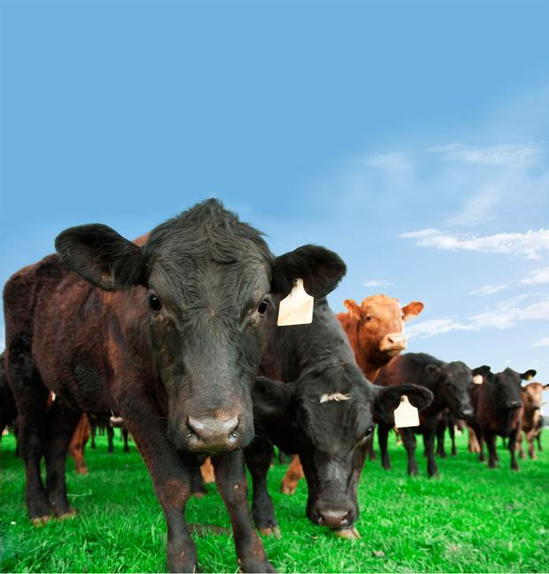 According to The Co-operative's own research in the so-called 'Born and Bred' report, meat imports into the UK doubled over the past 20 years. (Stock picture)