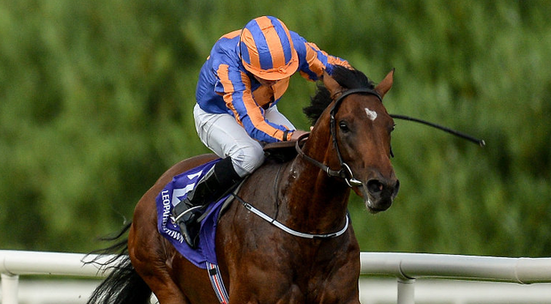 Churchill, with Ryan Moore up, lead the field on their way to winning last year's Japan Racing Association Tyros Stakes at Leopardstown. Photo: Brendan Moran/Sportsfile